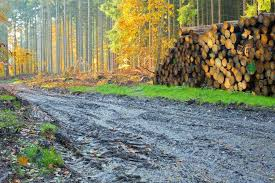 Anunt cu privire la obtinerea de material lemnos, contra cost, de la Ocolul Silvic Pucioasa