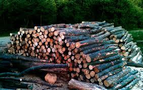 Anunt vanzare lemn-Ocolul Silvic Sturzeni